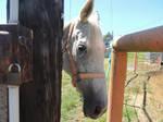 Horse Head by MissEmkay