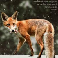 HEE Avatar | Fox Ridge by ElysianEquine