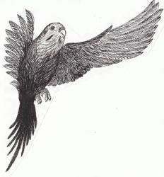 budgerigar 2 by SongOfAlbionTri