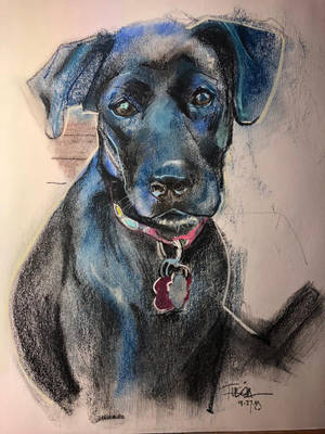 Dog in Charcoal by Fusciart
