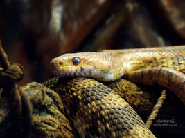 Snake by xBarbaraG