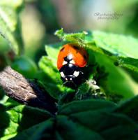 Ladybug 2012 by xBarbaraG