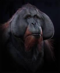 Orangutan by BenMauro