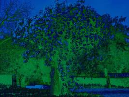 Night blossom tree by johnny-PT