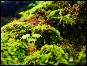 moss - 3 by johnny-PT