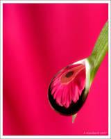 Macro Flower Drop  July 28 07 by Hatch1921
