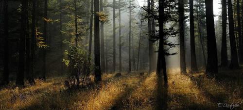 Follow the light... by emmanueldautriche