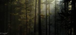 Dream of light by emmanueldautriche