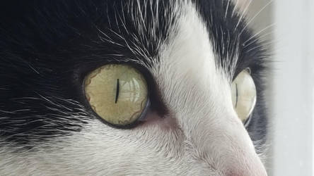 Most intense eyes of the cat. by CodeNameEpic