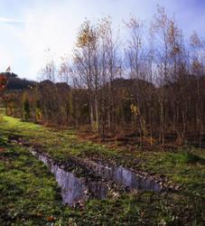 Morning Field by danhortonszar
