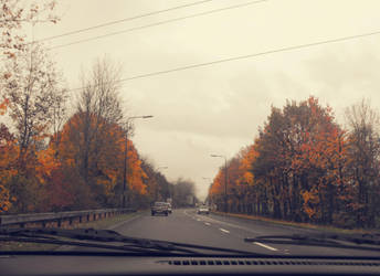 like these autumn leaves. by laurengee