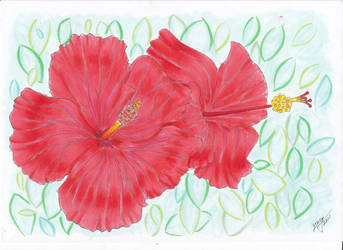 Hibiscus by Lucifielle