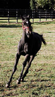 Horse by NoctemPhotography