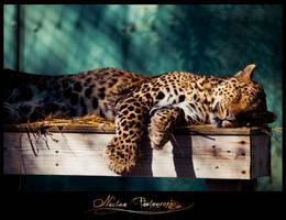 Cat Nap by NoctemPhotography