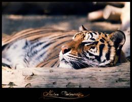 Cat Nap 2 by NoctemPhotography