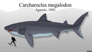 The Meg 2018: The Sharkening by Paleonerd01