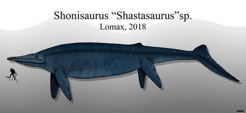 Titan of the Triassic: Shonisaurus sp. by Paleonerd01