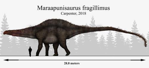 Mystery Solved: Maraapunisaurus fragillimus by Paleonerd01