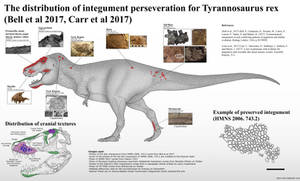 The Integument of T.rex by Paleonerd01