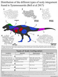 The Types of Scales of Tyrannosaurids by Paleonerd01