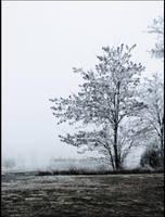 winter tree by PaulinaPat