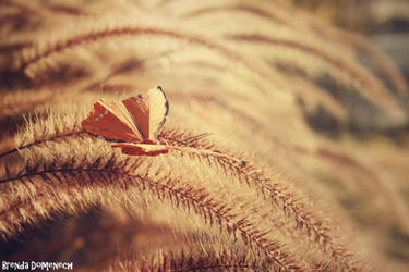 Like a butterfly... by Finalfantasioso