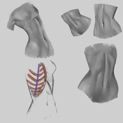 Study - Anatomy 9 Abdomen Female by Zeke-Yggrassil