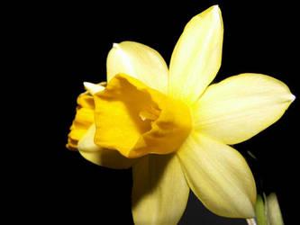 kleine Blume by doerfler