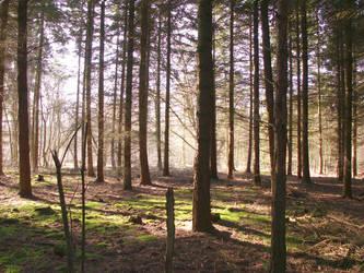 Forest by doerfler