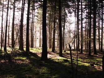 Forest 2 by doerfler