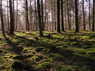 Forest 3 by doerfler