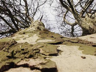 tree by doerfler