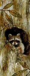 raccoon by jbillustration