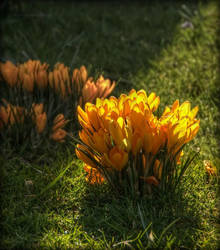 Have you seen Spring yet? 8 by Isyala