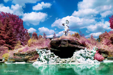 FS Eerie Garden IV by IRphotogirl