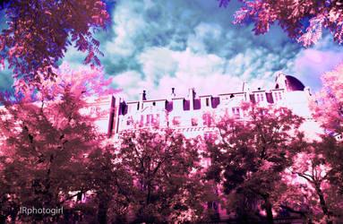 Full-Spectrum Wanderings VI by IRphotogirl