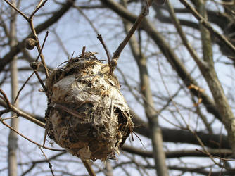 Birds Nest by kashmier