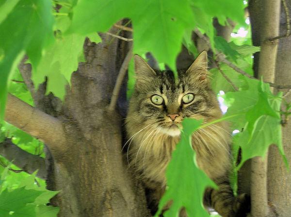 Tree Kitty Cat by kashmier