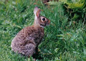 PJ Bunny by kashmier
