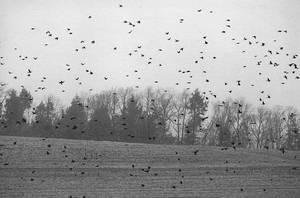 The Birds II by kashmier
