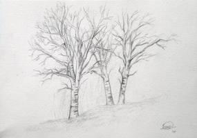 White poplars by montmartre96
