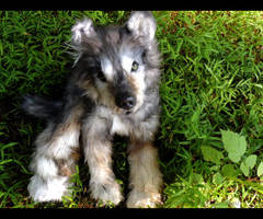 POSEABLE WOLF PUP OOAK DOLL by Arcticsong
