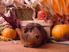 Fall Guinea Pigs: Pocky by LadyTsunade