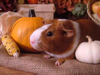 Fall Guinea Pigs: Kokiri by LadyTsunade