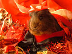Holiday Guinea Pigs 6 by LadyTsunade