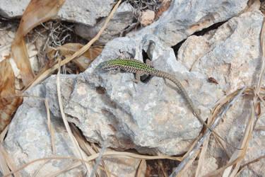 lizard with spots! by chloe-tsundere