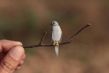 SHIKRA - Paper cut birds by NVillustration