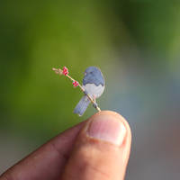 Dark-eyed junco - Paper cut birds by NVillustration