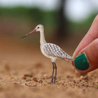Marbled Godwit - Paper cut birds by NVillustration
