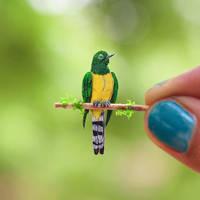 African Emerald Cuckoo - Paper cut birds by NVillustration